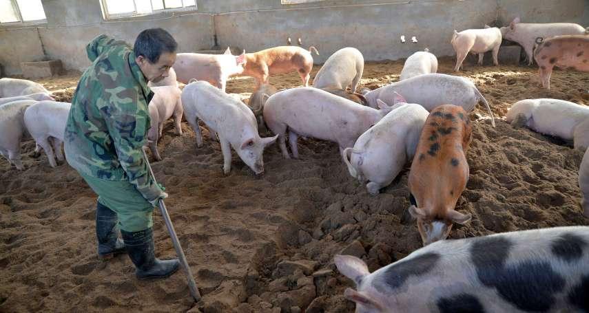 為何這次非洲豬瘟疫情會這麼慘烈?中國農業部人員調查分析出三大原因