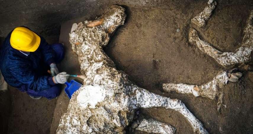 龐貝近郊挖出古羅馬駿馬遺骸!火山灰掩埋近2000年、疑為高階將領坐騎