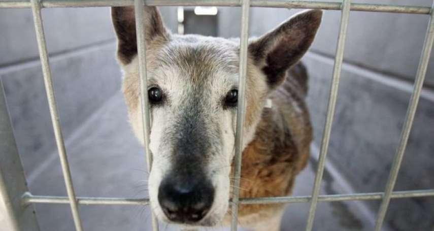 加州開始打擊寵物繁殖工廠!新法元旦上路:寵物店只能賣「獲救動物」
