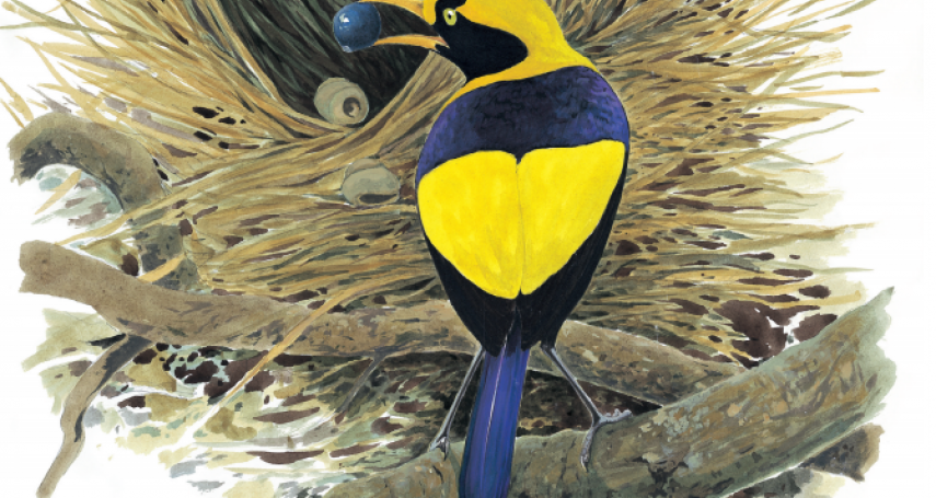 社會織巢鳥的荒漠旅店:《鳥巢》選摘(2)