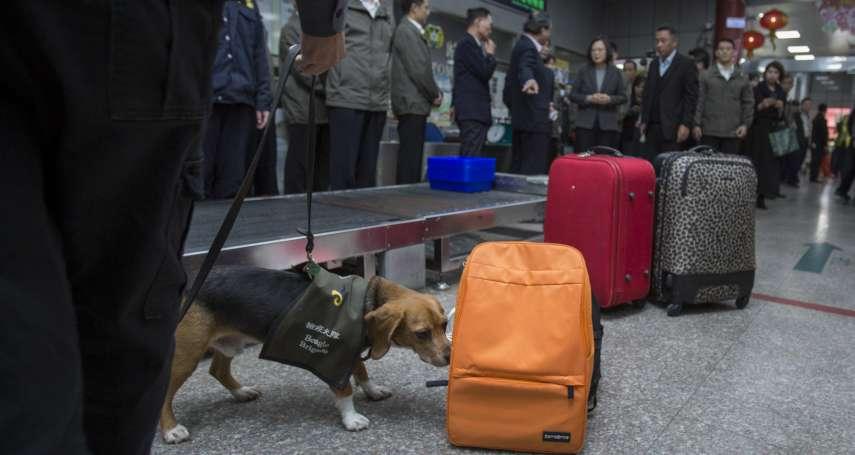 緬甸也淪非洲豬瘟疫區!今起首班旅客入境全面檢疫,帶豬肉罰20萬元起跳