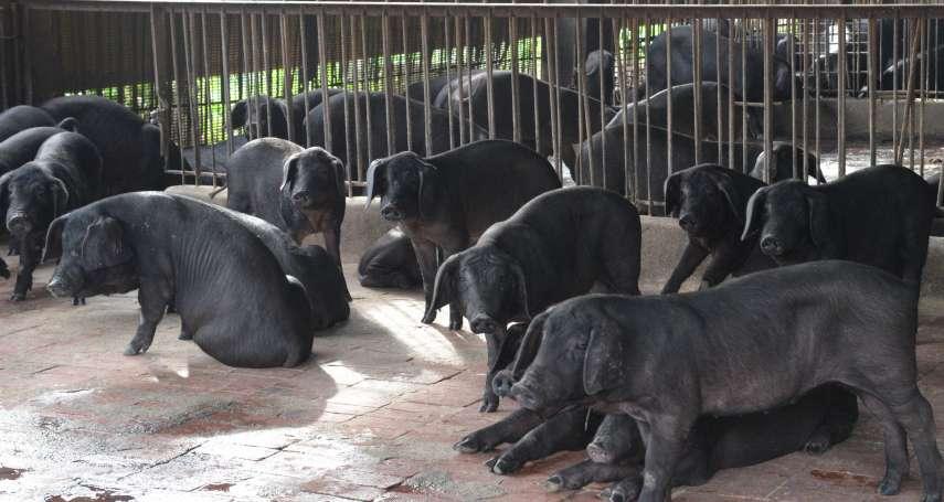 朱淑娟專欄:有更科學的方法處理廚餘,為什麼非要養豬不可?