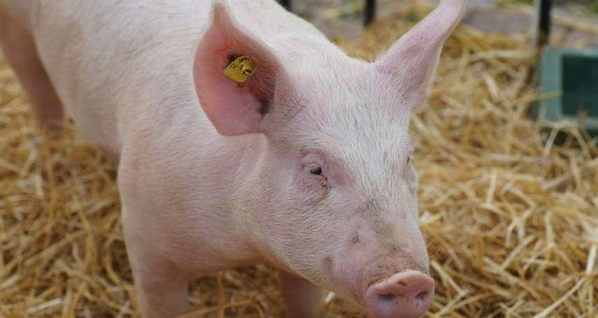 非洲豬瘟防疫不鬆懈 動防所籲勿隨意丟棄死廢畜