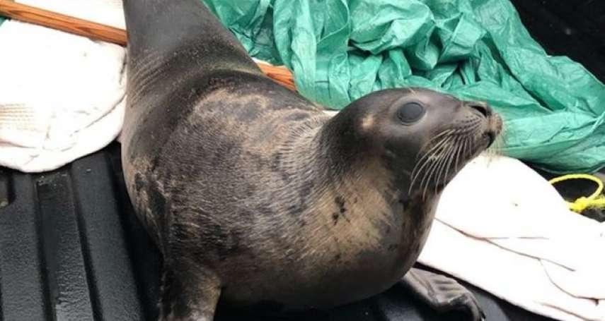 從40隻海豹圍困加拿大小鎮談起:商業捕殺海豹帶來的愛恨情仇