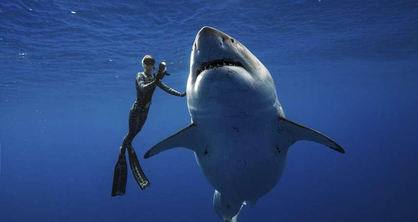 「牠不是冷酷怪物!」6公尺長大白鯊現身夏威夷海域,研究員驚喜「與鯊共舞」