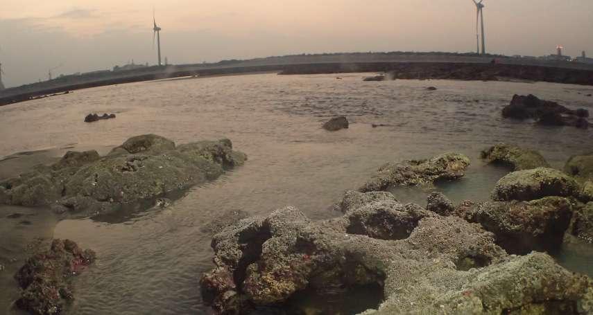 觀塘案》大潭藻礁列全球「希望熱點」!環團再赴行政院抗議,向法院聲請撤銷環評結論