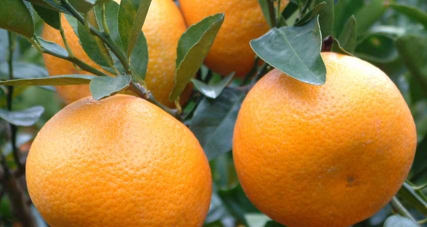 逢年過節少不了柑橘,但這個「冬季水果之王」你了解多少呢?快來看柑橘家族「第一名」大比拚