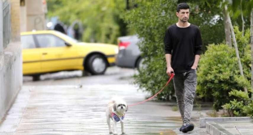 伊朗政府不贊成民眾養狗:在公共場所帶狗散步,德黑蘭要罰!