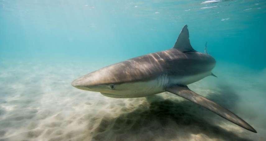 以色列海灘新奇景:鯊魚「泡溫泉」!