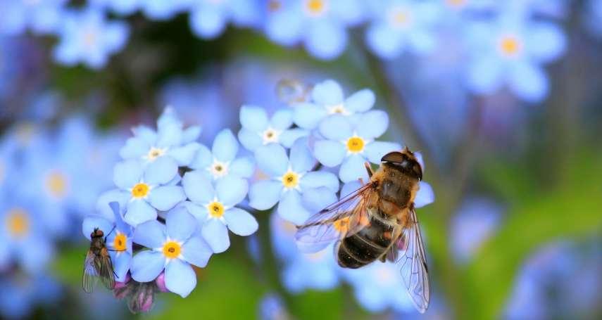 「蟲蟲危機」敲響警鐘!最新科學研究:全球昆蟲數量銳減,100年後將全部絕種!