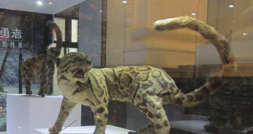 40年不曾現蹤的台灣雲豹到底還存不存在?原住民部落耆老露神秘微笑這樣說…