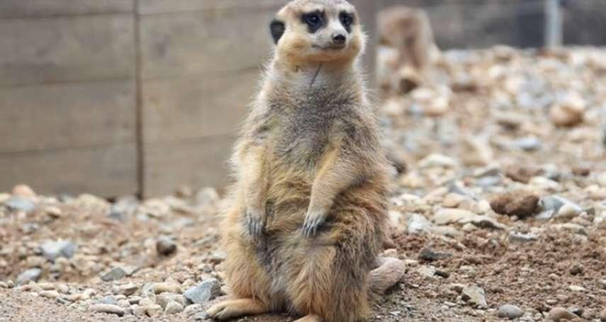難過時就來動物園走走:愛知縣豐橋市府宣導海報盼藉動物之力防自殺