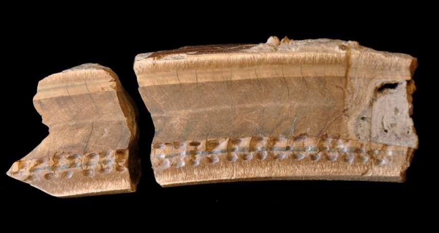 封存萬年的時光膠囊!深藏水底的絕種動物「地懶」化石出土 意外揭開2萬7000年前氣候樣貌!