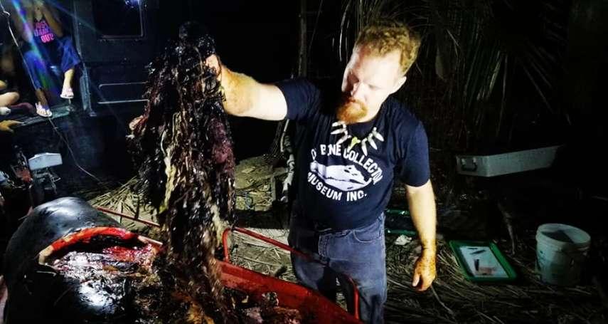 鯨魚擱淺吐血亡!解剖竟發現肚內塞「40公斤塑膠袋」…專家心碎控:牠是被活活餓死的