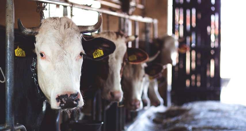 毒害大自然、危害人類健康、全球暖化加劇…《衛報》:大量牲畜排泄物已成地球一大問題!