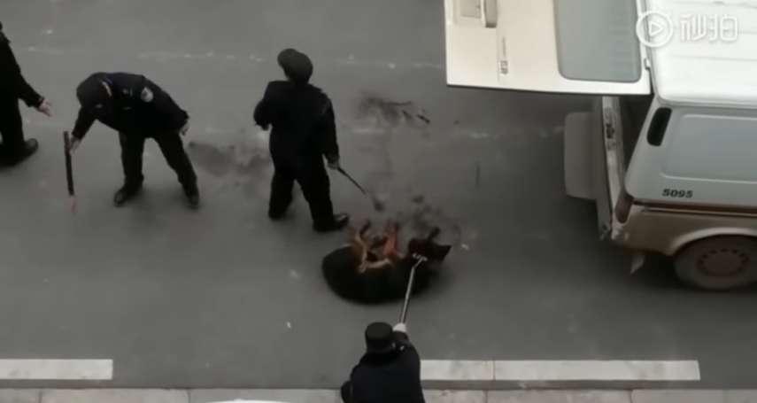中國武漢頒布「打狗令」禁養肩高45公分以上家犬,網曝警察當街殘忍殺狗影片!