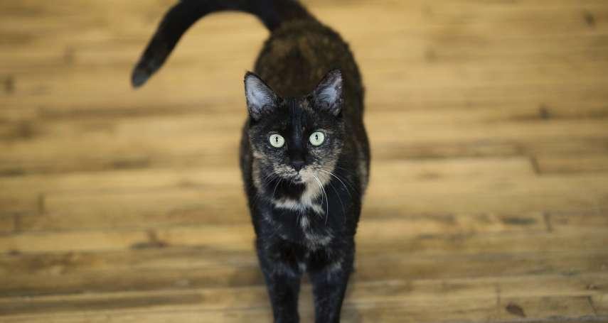 人類可跟貓咪溝通了?日本研究:喵星人聽得懂人話