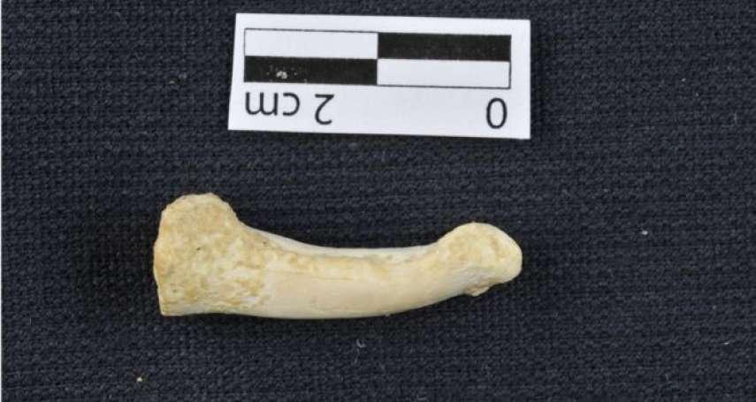 菲律賓的遠古人類之謎:距今約6萬年前的呂宋人,是怎麼到達菲律賓群島的?