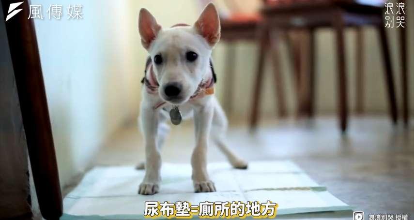 別再對寵物打罵教育!掌握訣竅跟3個「時間點」,3分鐘就能教會狗狗定點大小便【影音】