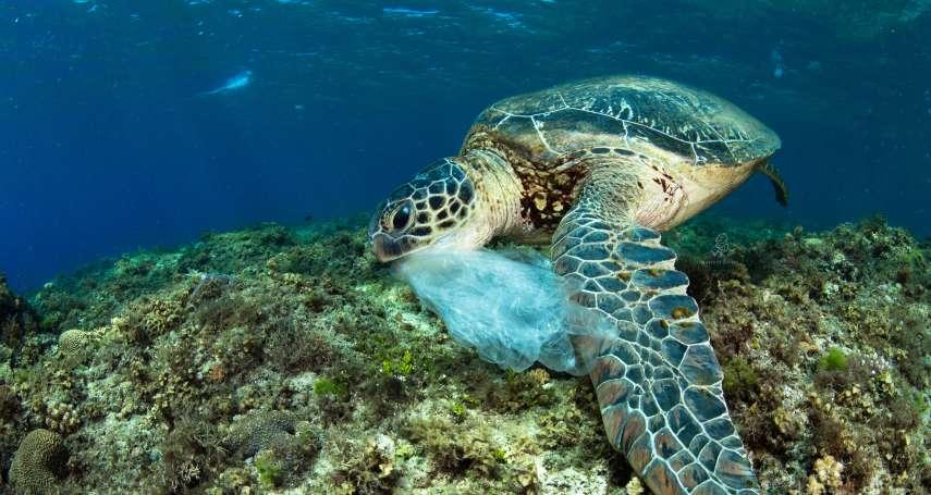 9成海龜死後解剖,體內竟都含垃圾!你正拿著的塑膠袋,可能就是牠們的致命殺手