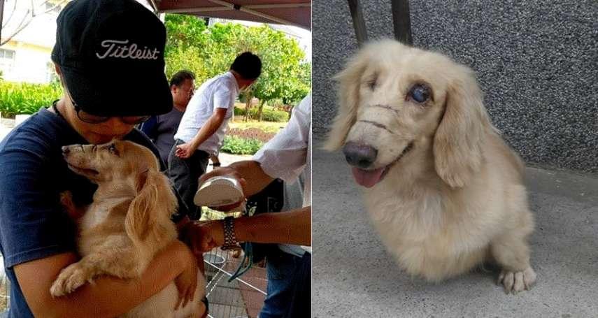 雙眼失明、臉上有刀痕,被丟在偏遠山區自生自滅…受虐狗兒被他們所救,展開全新幸福生活