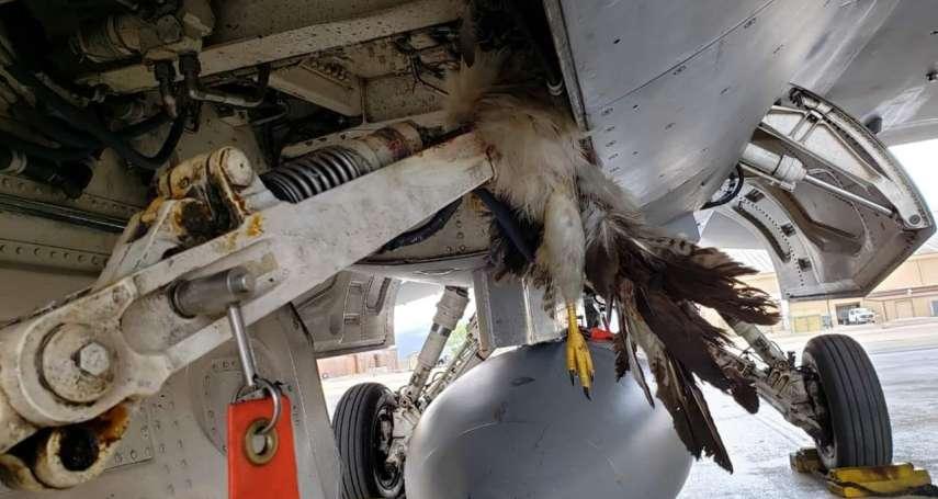 這一撞就是6千萬!駐日美軍發生鳥擊F-35B事故,修復費用粗估至少兩百萬美元