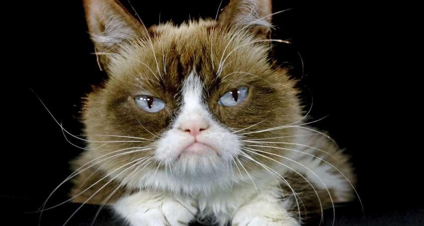 美國網紅「臭臉貓」尿道炎病逝!科學家:AI技術讓牠在網路世界永垂不朽
