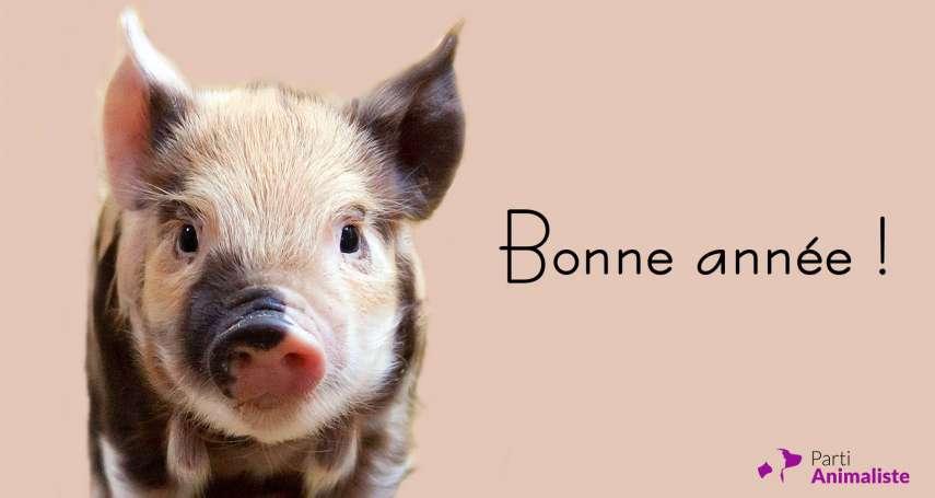 黨員才2000人、選舉海報用貓狗照片,支持度卻比黃背心還高!法國「動物黨」帶起選舉新氣象
