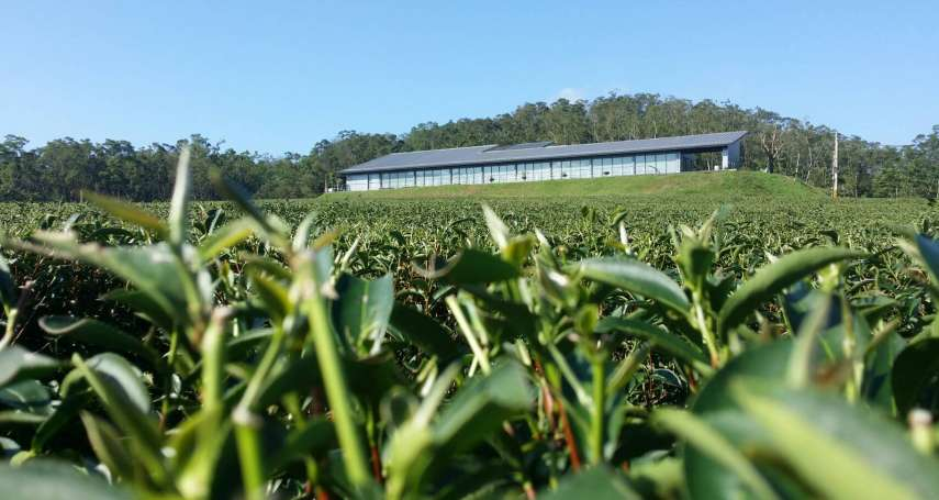 一株茶樹種回一個山頭:《農產加工不只醬》選摘(2)