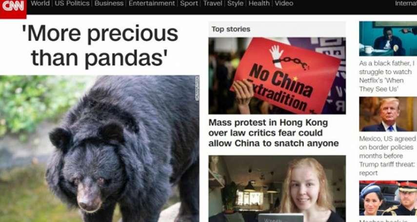 「比大貓熊更珍貴」 台灣黑熊登CNN官網頭條