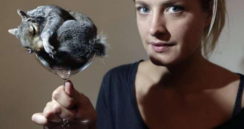 動物標本製作界的女性:把動物屍體變為藝術品,「這是一種愛的勞動」