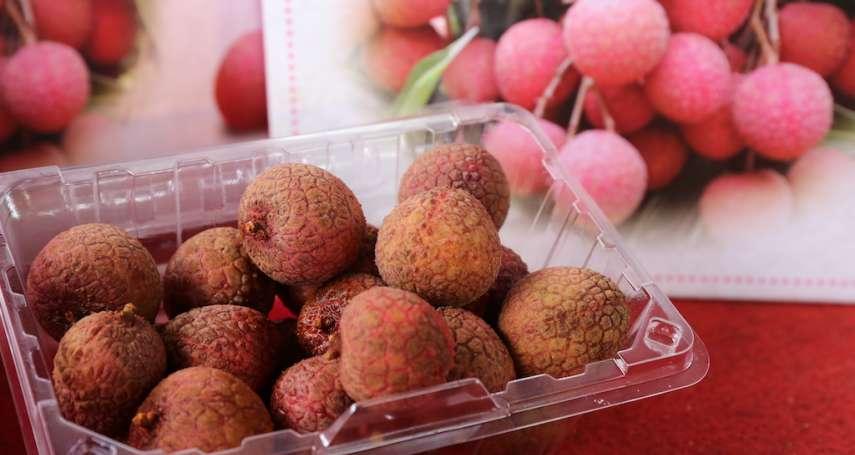 台中2公噸荔枝外銷日本 打造台灣水果品牌