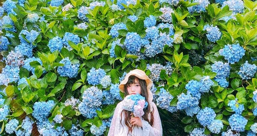 誰說賞花只能去日本?精選全台5處夏季賞花仙境,花仙子們快筆記起來!