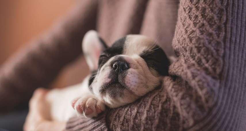 國人飼養貓狗寵物破250萬大關!這些法條爭議,卻讓毛小孩們面臨「無藥可醫」的窘境