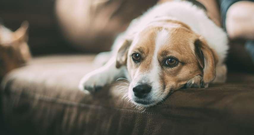 被動物咬傷,擔心罹患致死率幾乎100%的狂犬病?「毛小孩」接種疫苗是預防關鍵