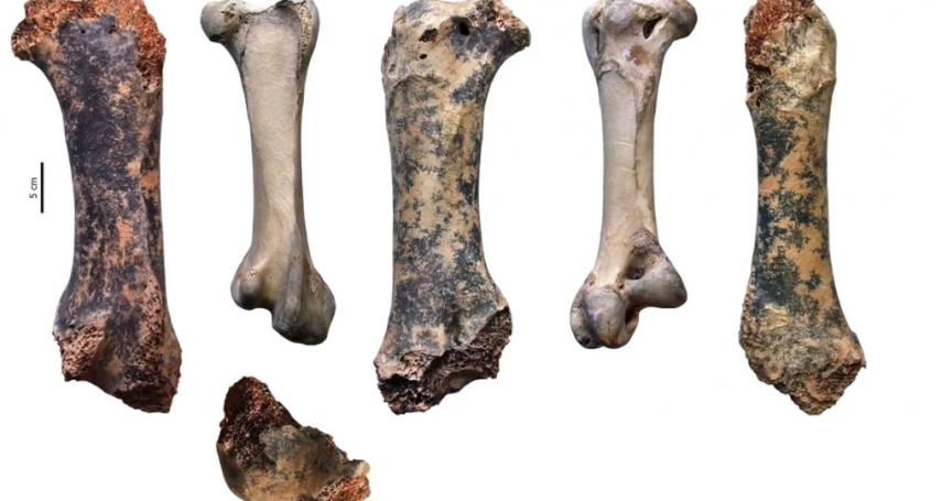 北半球第一例!3.5公尺高、450公斤史前巨鳥化石在克里米亞洞穴出土 曾與人類祖先一起生活
