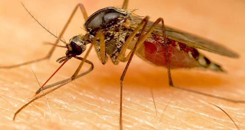 到底該怎麼預防登革熱?4大驅蟲妙招報你知:防蚊劑其實要這樣選