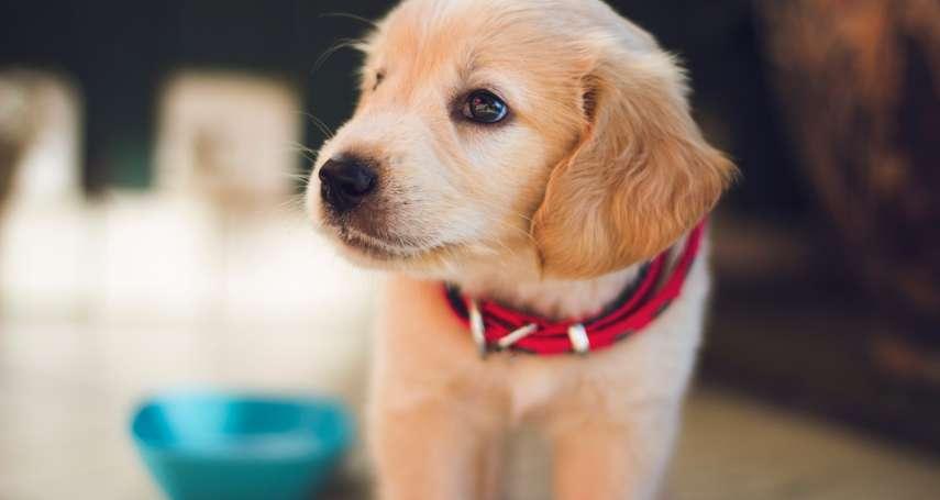 中國狗權漸獲關注?山西太原「最嚴養狗令」近日出爐:禁止鬥犬活動、不能遺棄犬隻