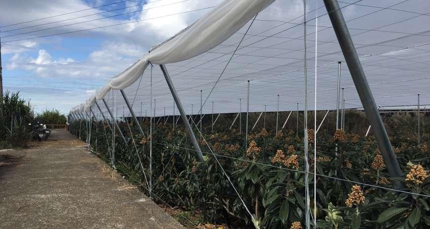 因應極端氣候 農業生產推向設施園藝栽培