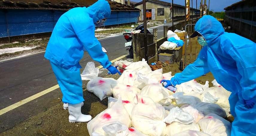 彰化獲報H5N2禽流感 25日完成撲殺清場消毒