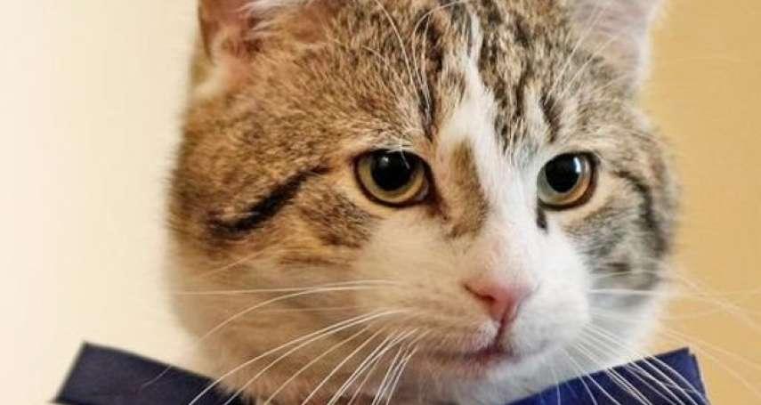 唐寧街貓咪傳奇:流水的英國首相 鐵打的捕鼠大臣