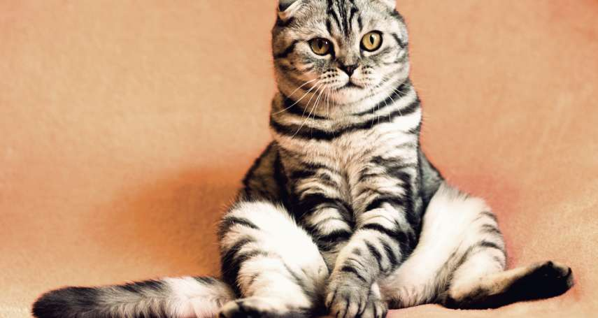 貓奴必知》貓咪可以活多久?貓的年齡要怎麼算?簡單4招教你判斷!