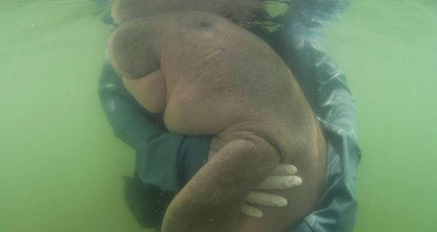 融化無數網友的「小美人魚」走了!泰國「網紅儒艮」塑膠碎片塞住腸胃,感染喪命