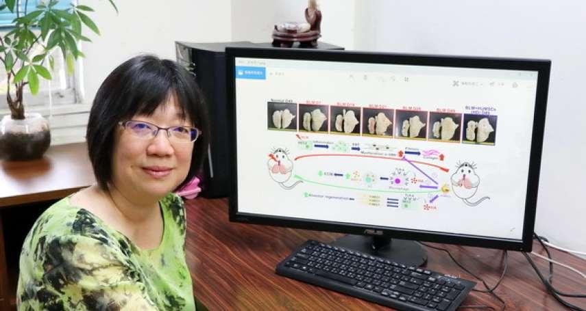 「菜瓜布肺」有解了!幹細胞治療1個月內逆轉肺纖維化 台灣研究團隊領先全球