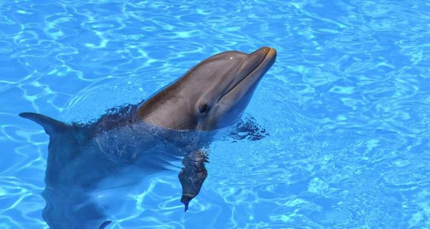日本「殺海豚節」與恢復商業捕鯨的持久爭議