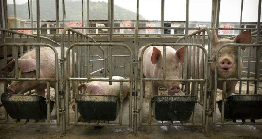 萊豬進口定調 衛福部:目前已進口豬肉業者「免查廠」