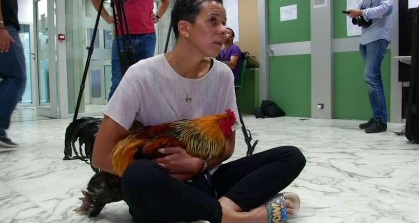 「你的公雞有權在清晨啼叫」鄰居嫌太吵,法國公雞莫里斯飼主挨告:法官判原告敗訴