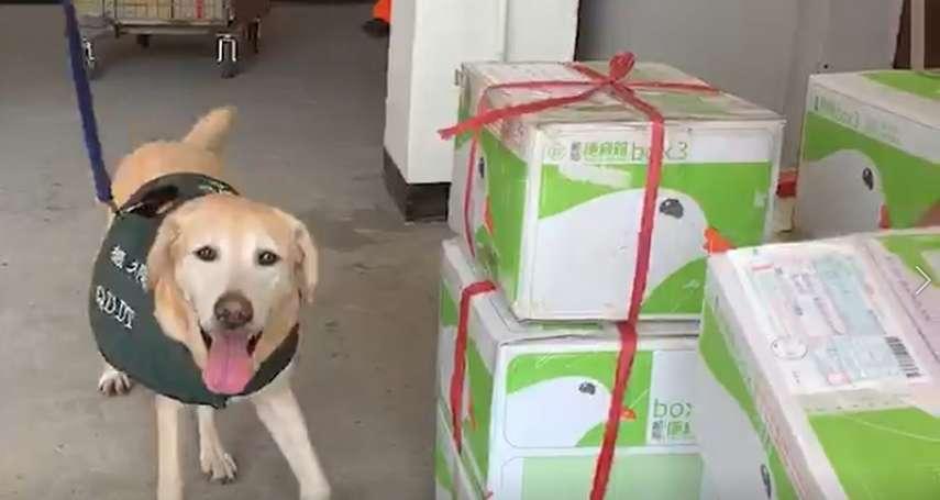 用「嗅覺」防堵非洲豬瘟進入台灣 檢疫犬協助海巡署於金門把關