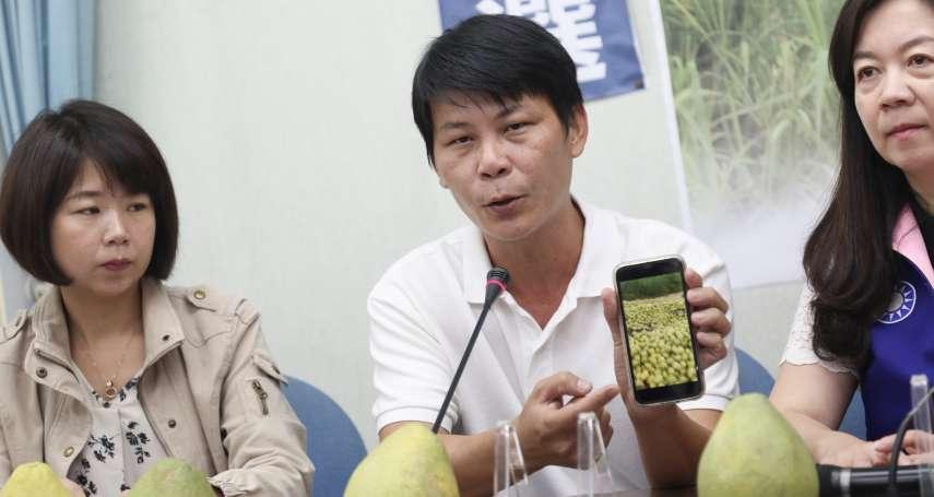 政府力挺台灣鳳梨?林佳新酸:連台糖鳳梨罐頭產地都在泰國