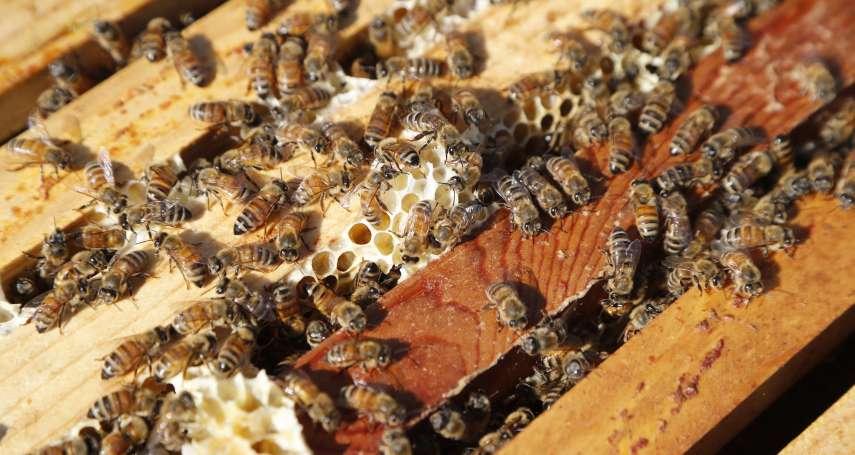 蟲蟲危機!巴西近5億隻蜜蜂暴斃 ,8成體內含「高毒」殺蟲劑